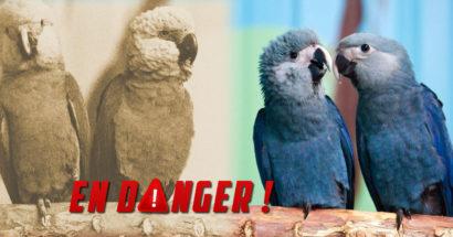 168 oiseaux en voie d'extinction pour 2018