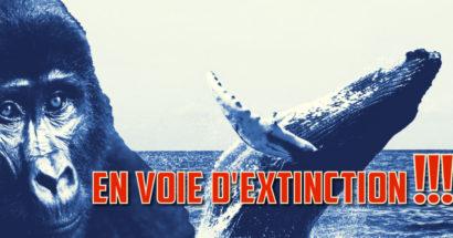 34 mammifères en voie d'extinction pour 2018