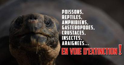 69 animaux en voie d'extinction pour 2018